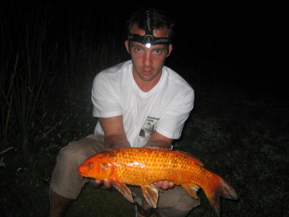 koi-carp-caught-at-Smallwater-lake-france